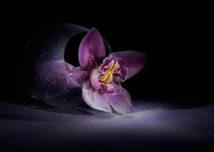 Цветы в фотографиях Натальи Кузнецовой (Nateletro)
