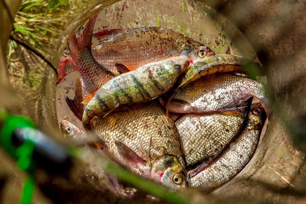 Речная рыба по старинному русскому рецепту
