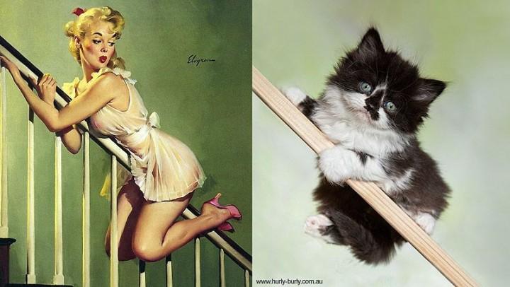 pinupcats13 Кошки и девушки в стиле пинап