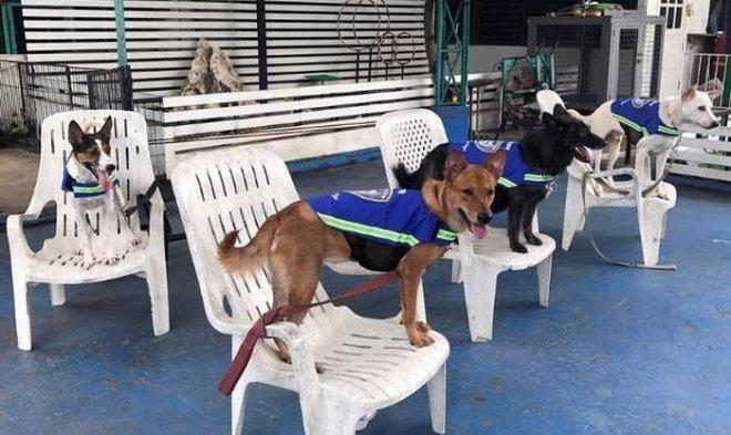 Умные жилеты превратят бродячих собак в стражей улиц