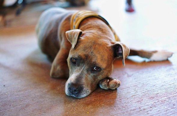 После года в заточении эта собака получила возможность жить так, что позавидуют многие люди