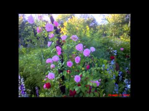 Цветы моей дачи