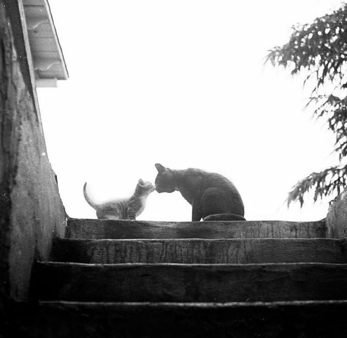 Уолтер Чандоха – человек, который 70 лет фотографировал кошек   24