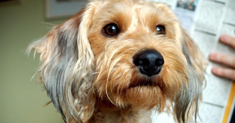 Истории о собаках, которые спасли жизни людям.