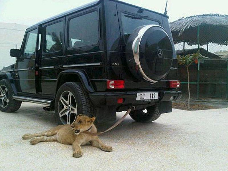 catsncars20 Хищные кошечки и дорогие машины: досуг арабского миллионера