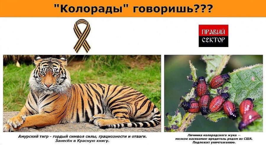 Украинский креатив