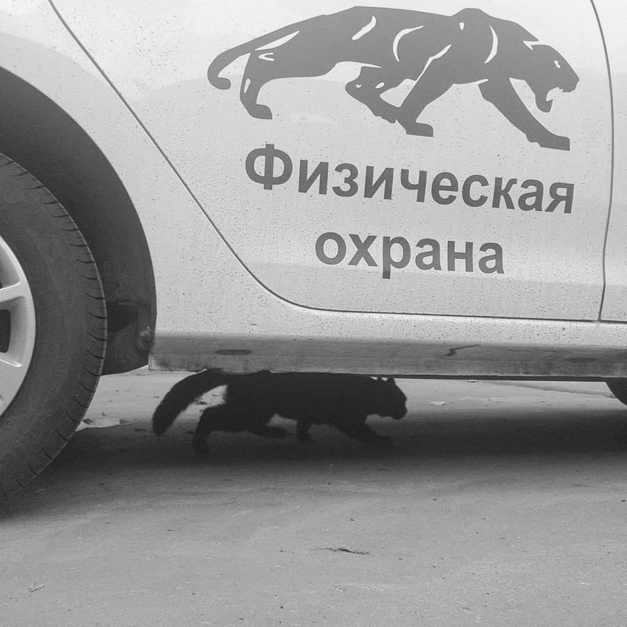 Сотрудники Эльдорадо скидываются на новогодний корпоратив по 1999 рублей
