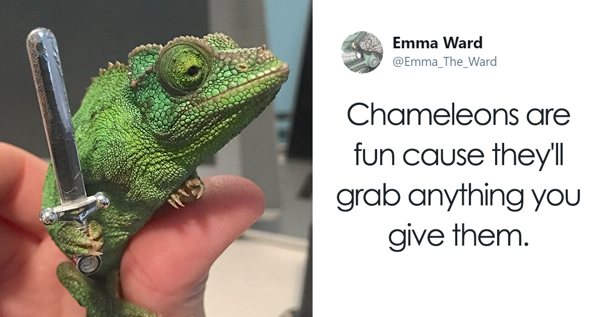 Someone Just Noticed That Chameleons Will Hold Onto Anything You Give Them, And It's Hilarious