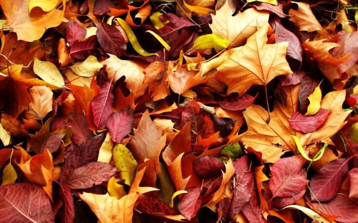 Убирать ли в саду палую листву?