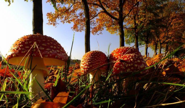 осенние грибы фото - 18