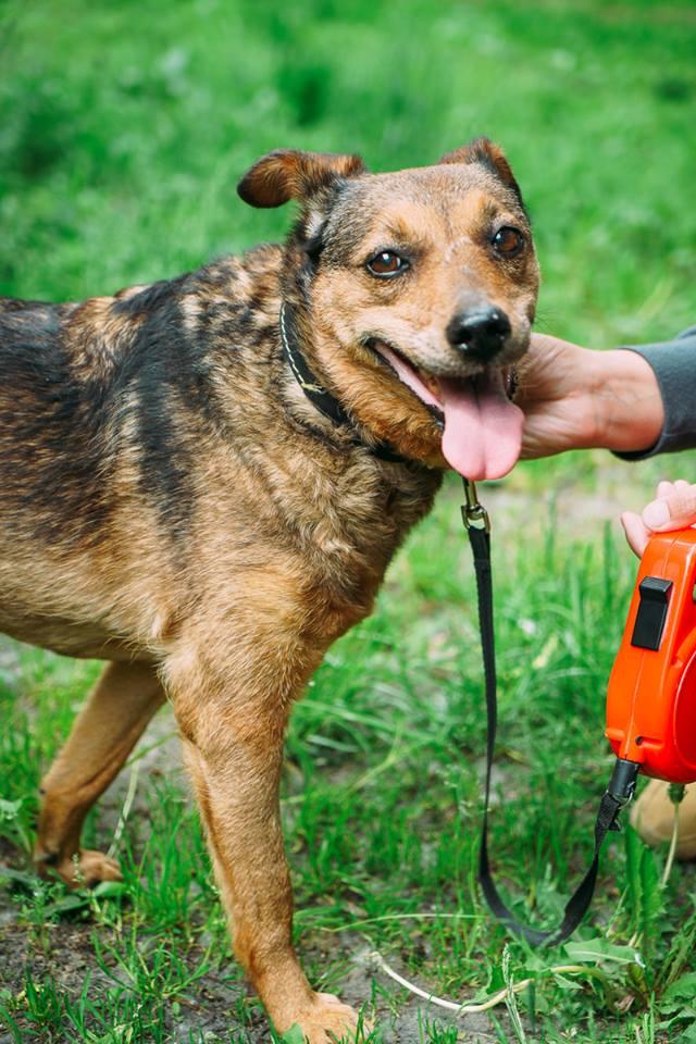 Собачке с непростой судьбой очень нужен дом и родной человек. Киев.
