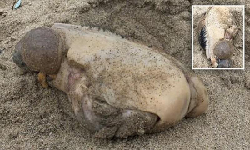 На пляж в Малибу море выбросило таинственного монстра