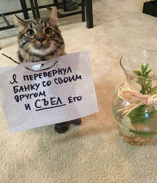 17 котиков, которые сильно провинились перед своими владельцами!