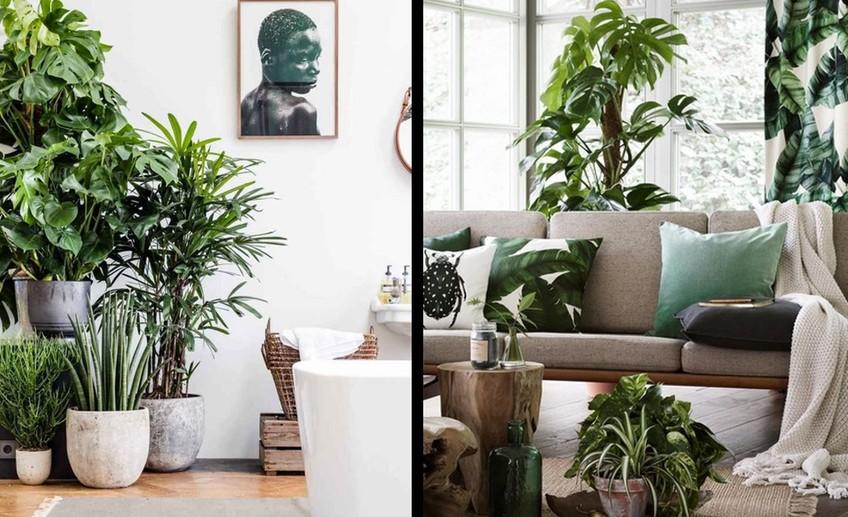 Среди растений: 29 интерьеров, в которых много зелени