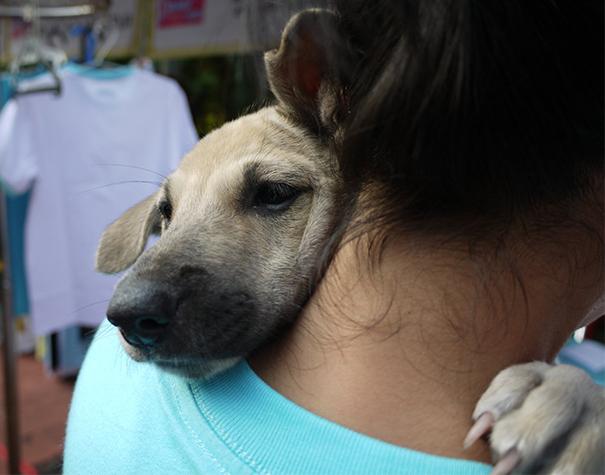 милые собаки обнимают своих хозяев (9)