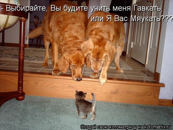 Котоматрица: или Я Вас Мяукать??? - Выбирайте, Вы будите учить меня Гавкать,