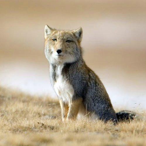 Мир продолжает удивлять — 7 уникальных животных, которых фотошопила сама природа