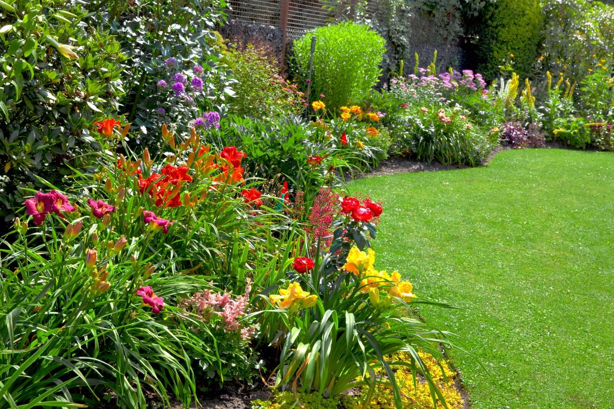 Красивые клумбы многолетних цветов