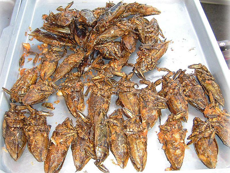 edible13 Фотогид по съедобным насекомым