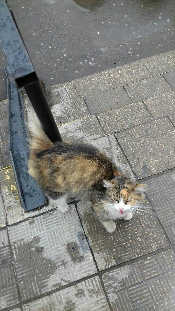 Кошечка захлебывается криком на улице. Выбросили. Москва, помоги.
