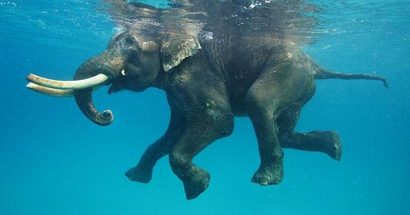 Они 12 часов спасали слоника, унесенного в море на 8 км! Люди задействовали все возможные способы, но не покинули животное в беде!