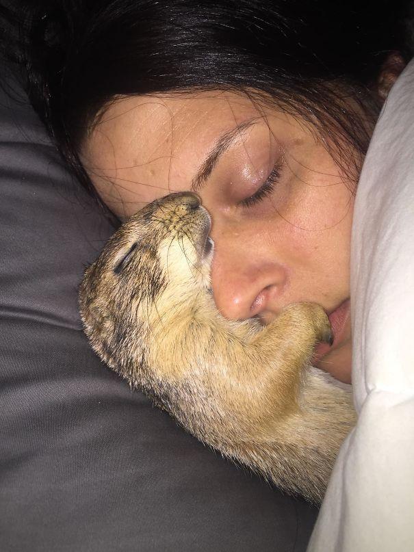 22 ситуации, когда животные отбили партнёров у своих хозяев, и им ни капельки не стыдно