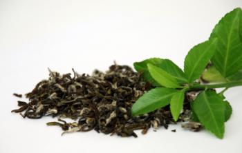 Green Tea May Help in Treatment of Dementia