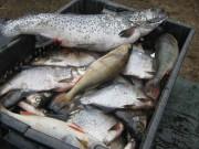 карелия рыбная ловля  каменицкое