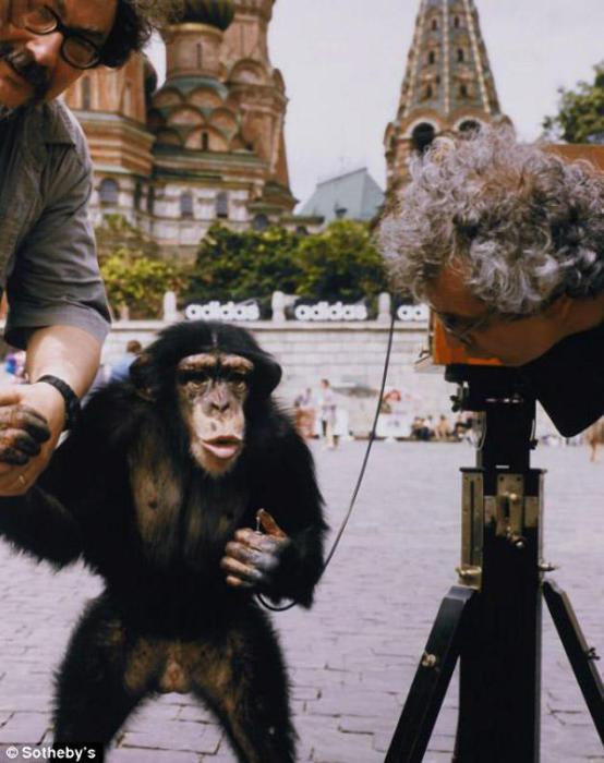 В этой серии фотографий 1998 года Комар и Меламид задали вопрос о роли человеческой расы на земле.