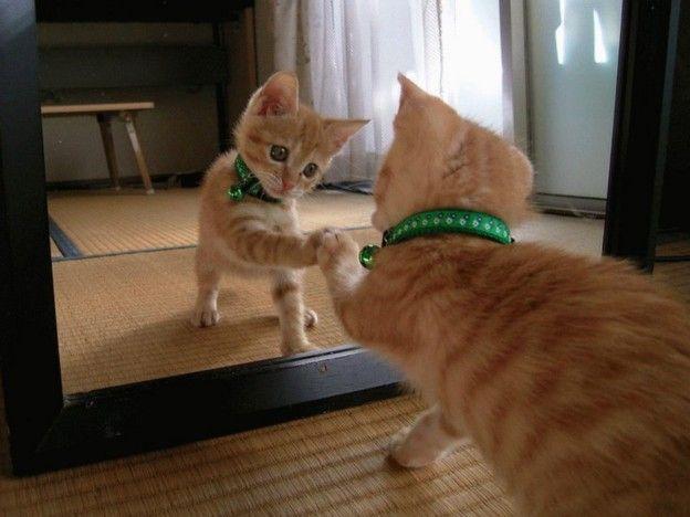 Коты против зеркал: смешные шокированные коты, увидевшие свою точную копию в зеркале