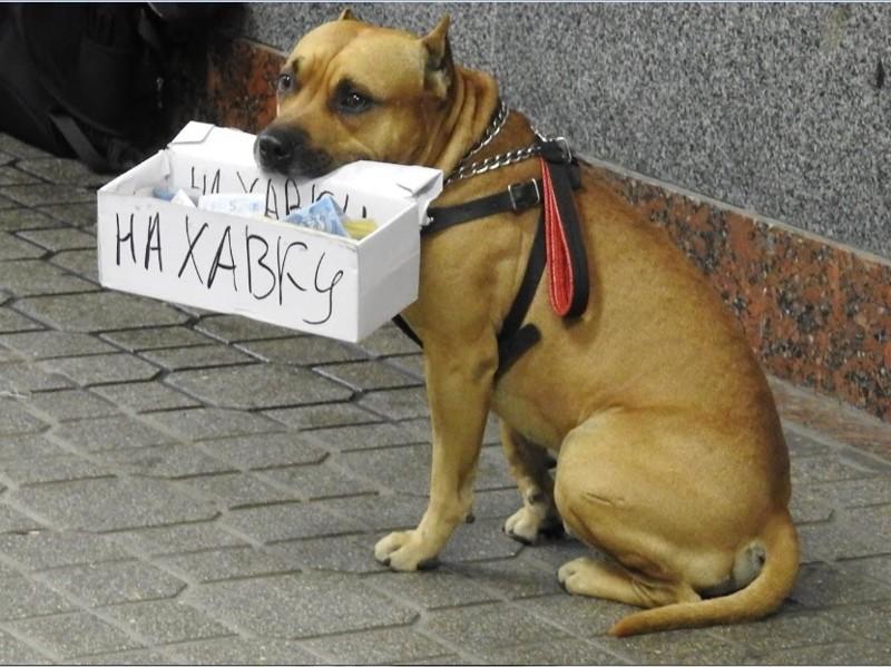 Некоторые используют своих животных,для того что выпросить деньги у прохожих бездомные, креатив, попрошайки