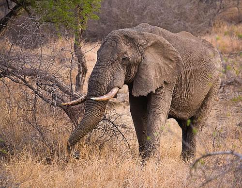 Секреты долголетия животных - остается только завидовать...