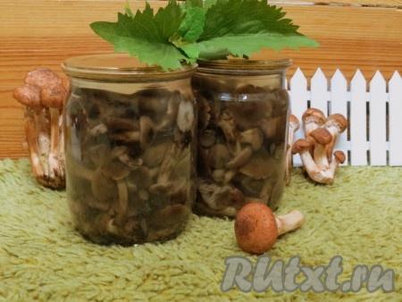 По этому рецепту из двух килограммов грибов у нас получилось 8 банок соленых опят по 0,5 литра. Зимой открываем баночку, промываем грибы в дуршлаге, затем минут на 30 заливаем тремя литрами холодной воды. По истечении времени готовим с грибочками любимые блюда: супы, подливы, салаты. А можно промытые соленые опята сбрызнуть лимонным соком или уксусом, добавить растительное маслице, нарезанный лук и подать к столу. Обязательно попробуйте на соль блюдо с грибами, возможно, солить придётся немного меньше. Баночки с солеными опятами, приготовленными по этому рецепту, можно хранить в условиях городской квартиры.