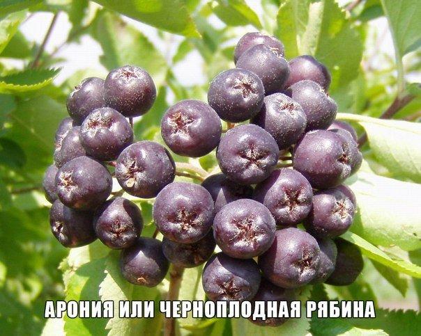 http://mtdata.ru/u9/photo3AB1/20982221448-0/original.jpg#20982221448
