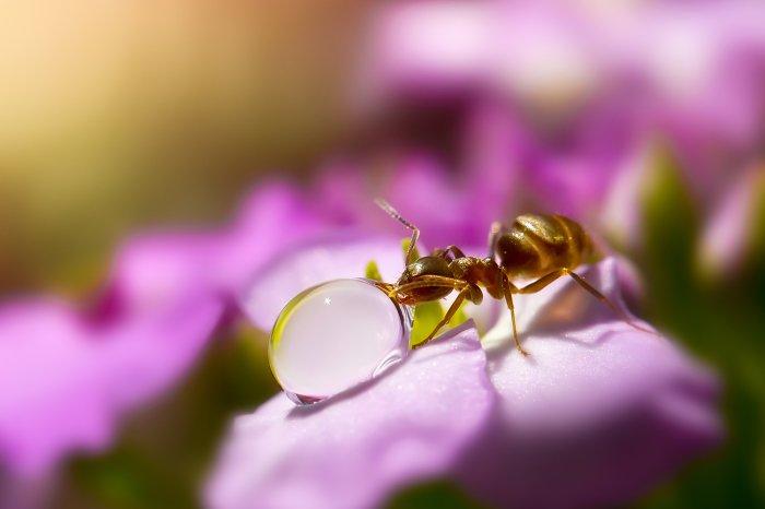 Очень красивые фото - муравьиная жажда