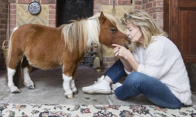 Мой крошечный пони))
