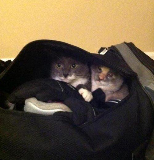 Они тоже хотят в отпуск!