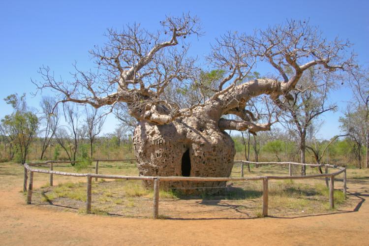 10 необычных деревьев, которые создала эволюция