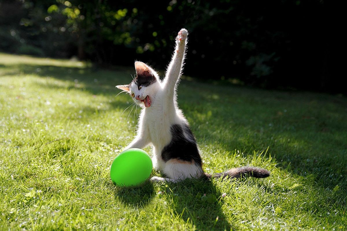 catrules11 15 правил жизни настоящего кота