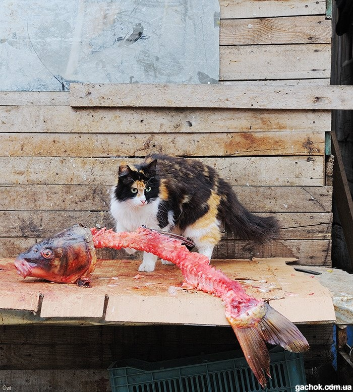 Приколы на рыбалке: фото
