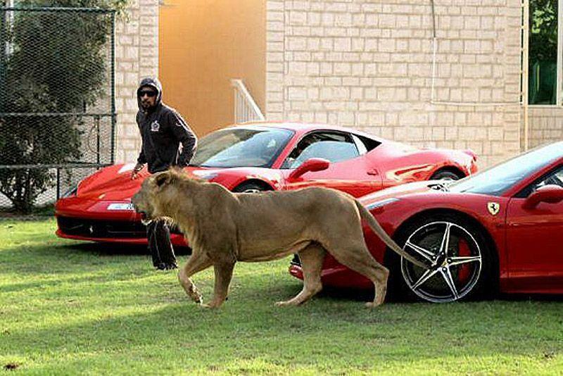 catsncars29 Хищные кошечки и дорогие машины: досуг арабского миллионера