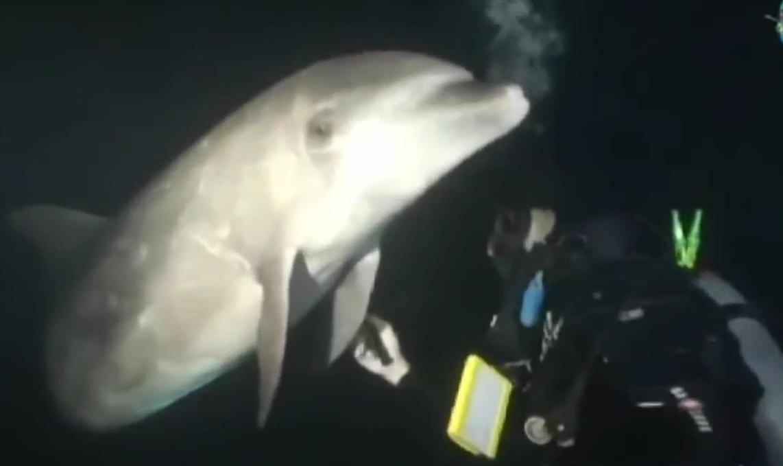 Дельфин, запутавшийся в рыболовной сети, попросил помощи у водолаза (  + ВИДЕО )
