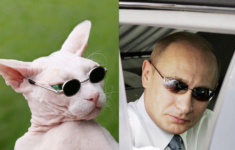 Кошки и Путин...Невероятное сходство...