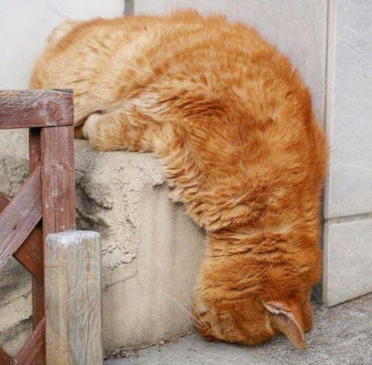Очень усталые котики
