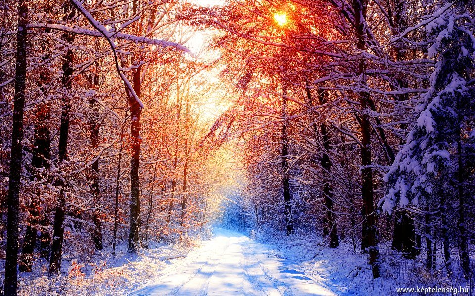 Winter Morning Forest HD Wallpapers Free Download - PCwallpapers.in