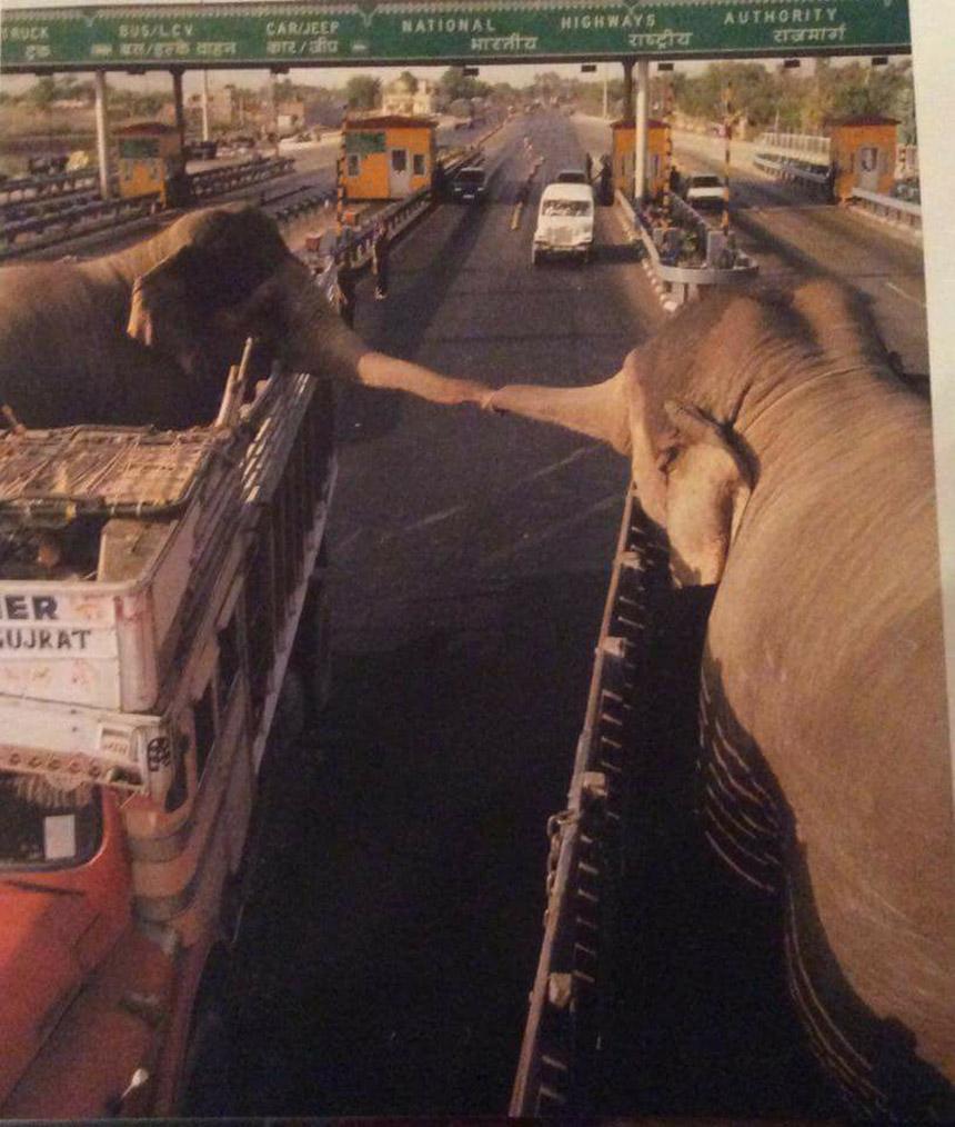 Эта фотография прощания слонов покорила сердца всего мира
