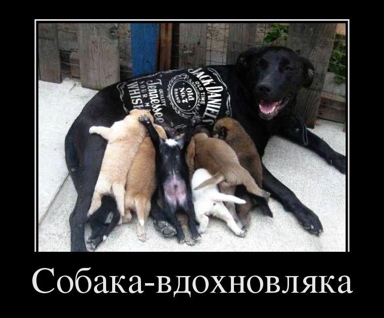 Собака - вдохновляка демотиватор, демотиваторы, жизненно, картинки, подборка, прикол, смех, юмор