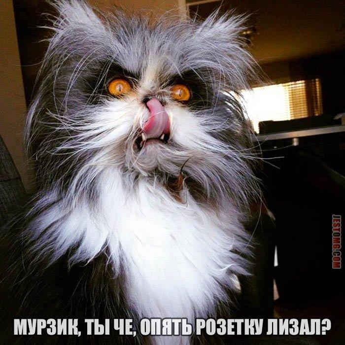 Когда-то жил у нас кот Мурзик
