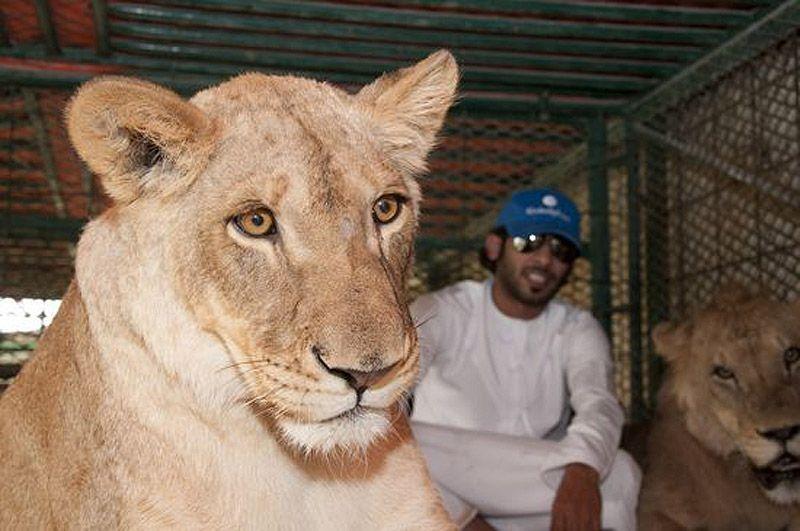 catsncars15 Хищные кошечки и дорогие машины: досуг арабского миллионера
