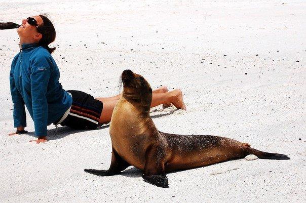 10 животных, которые занимаются йогой лучше, чем Вы